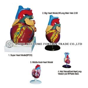 AH934 Heart Model