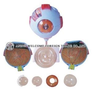 AH957 Giant Eye Model