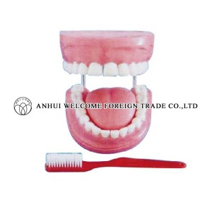 AH967 Giant with Tooth Gap Fixed Dental Care