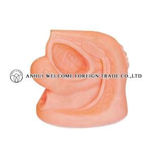 AH994 Female Reproductive Organ
