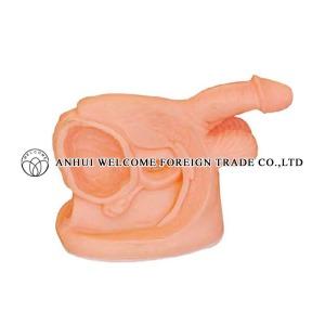 AH995 Male Reproductive Organ